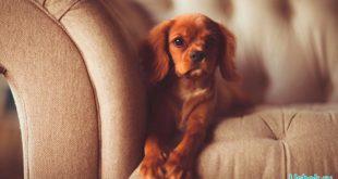 Собака в доме — все за и против